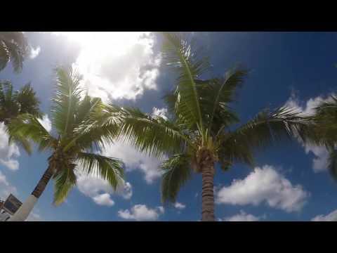 Palm Tree Mexico Timelapse
