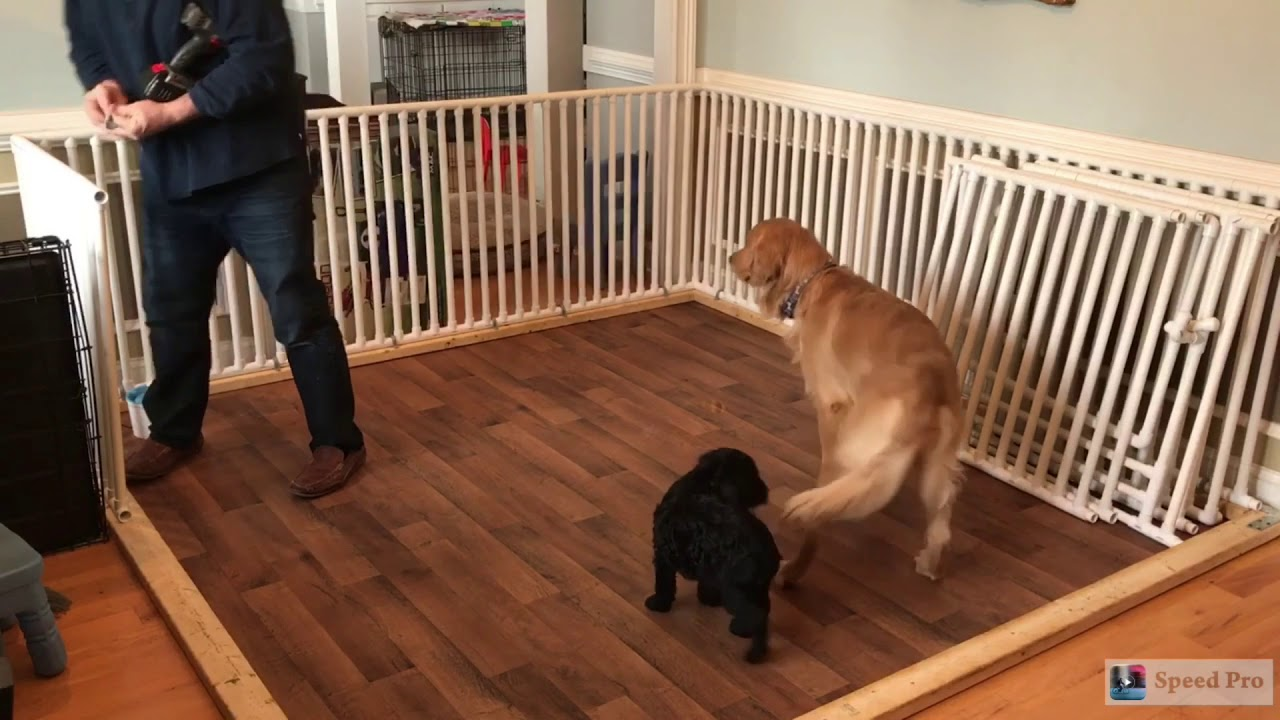 Whelping Box Plans Large Dogs