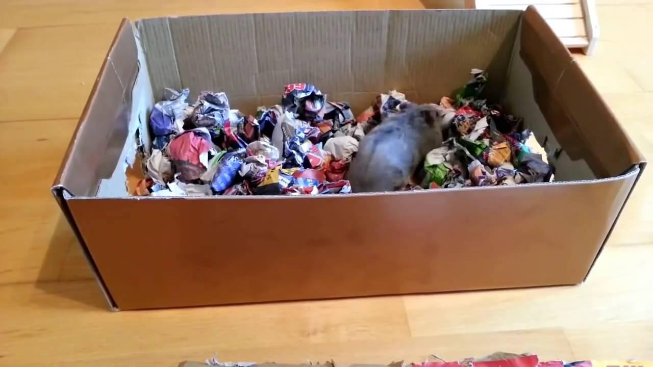 hamster spielzeug basteln besch ftigung f r nagetiere mein freund der hamster youtube. Black Bedroom Furniture Sets. Home Design Ideas