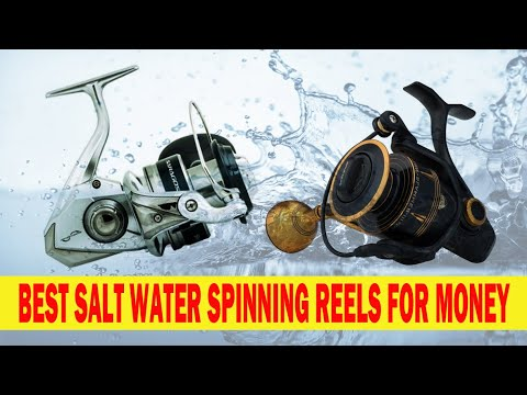 Best Salt Water Spinning Reels For The Price