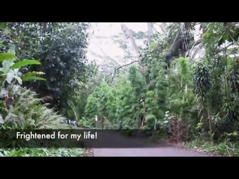 Manoa falls: Jurassic park