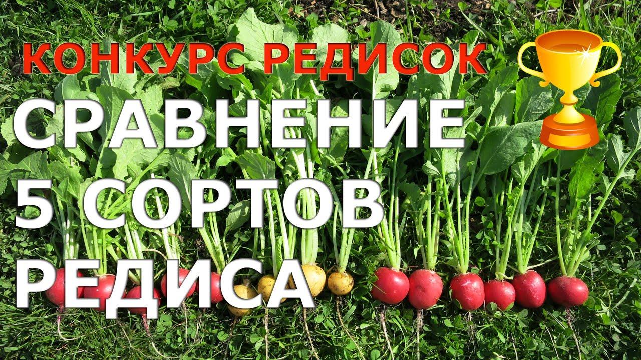 Наш интернет-магазин предлагает вам купить сорта редиса селеста f1 celesta f1 по выгодной цене. Доставка по всей украине. Звоните: 095.