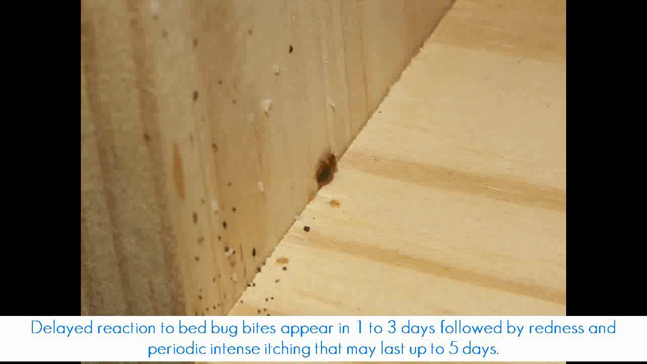 how to detect bed bugs in used furniture