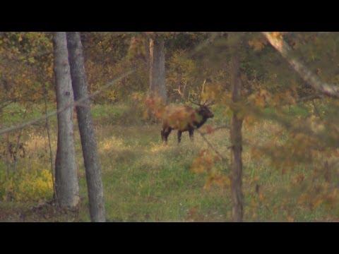 Wild SideTV-Tennessee's Record Elk