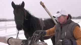 Заездка молодой лошади в сани - первый раз запрягли.(Заездка молодой лошади в сани - первый раз запрягли., 2016-01-28T13:01:00.000Z)