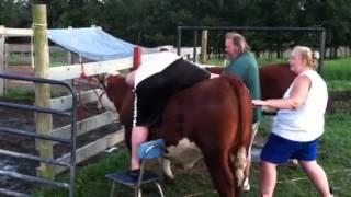 Riding a cow!