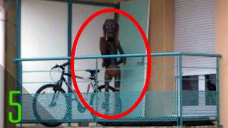 5 Mysterious Creatures Claimed to be Caught on Google Maps - Dark5