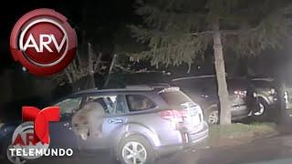 Así liberaron a un oso escondido dentro de un auto | Al Rojo Vivo | Telemundo