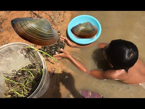 (Real Life 100%) - How To Find and Catch Freshwater Clams  and Mussels In My Village