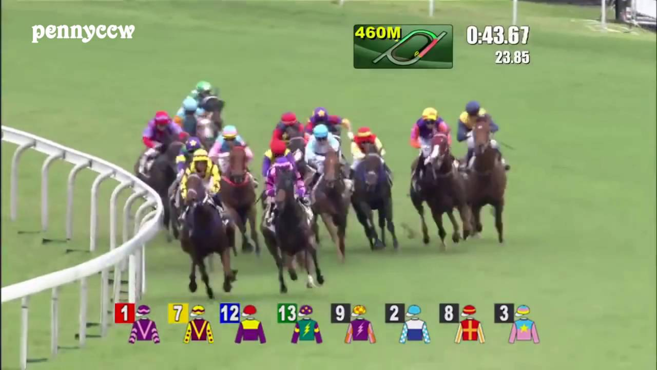 Craziest Horse Racing DEBUT Ever
