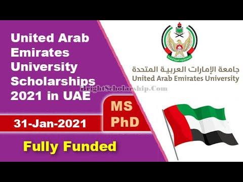 Uaeu Undergraduate Studies Infographics Youtube
