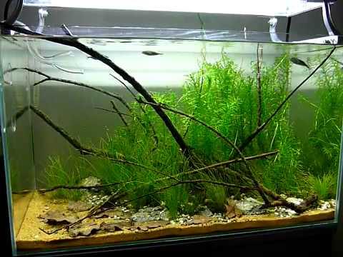 george farmer 39 s 60 litre uk biotope aquarium youtube. Black Bedroom Furniture Sets. Home Design Ideas