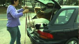 Train My Dog To Get Out Of The Car Safely