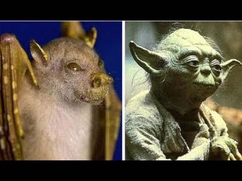 WHAT IS THE YODA BAT?