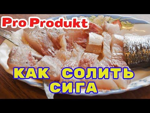 Засолка рыбы в домашних условиях сиг