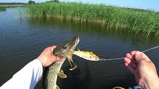 Летняя рыбалка Ловля Щуки в Жару