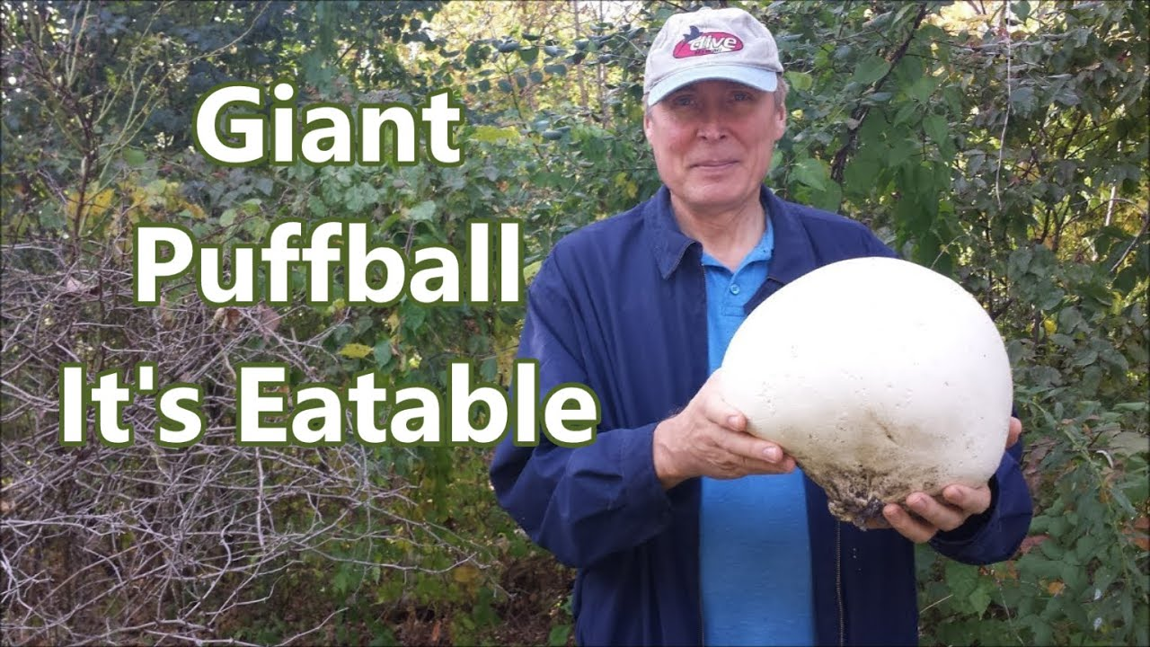 Cooking Amazing Giant Mushroom - Puffball | Mushroom recipes