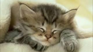 Колыбельная для Котёнка