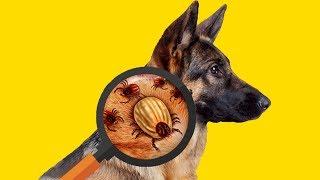 Как Защитить домашних животных от клещей ?