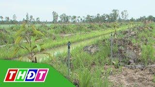 Lựa chọn cây trồng khi lên vườn | Tái cơ cấu nông nghiệp | THDT