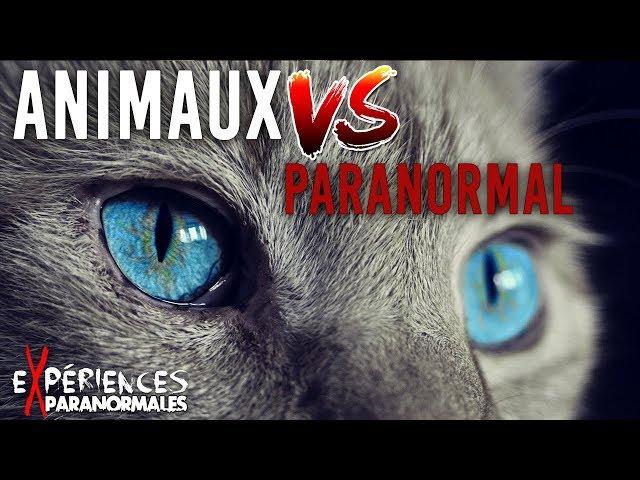 Expériences Paranormales - Les animaux face au paranormal !