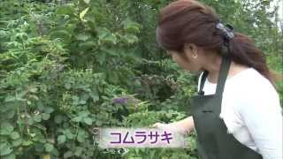 横浜イングリッシュガーデンのバラの夏剪定をご紹介♪ 秋バラの見頃は1...