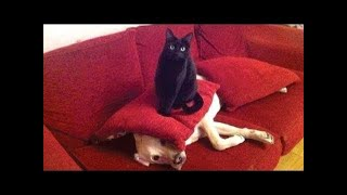 CATS will make you LAUGH YOUR HEAD OFF - Funny CAT ...