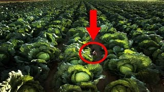 You Won't Believe this Top 5 Largest Vegetables of its Kind