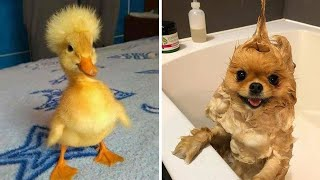 Cutest Baby Animals Videos Compilation Funny Moment of the Animals  Cutest Animals #5