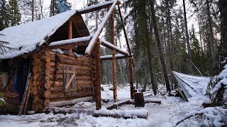 Going to live in the log cabin. Hunting for grouse with husky in the taiga. Forest Film
