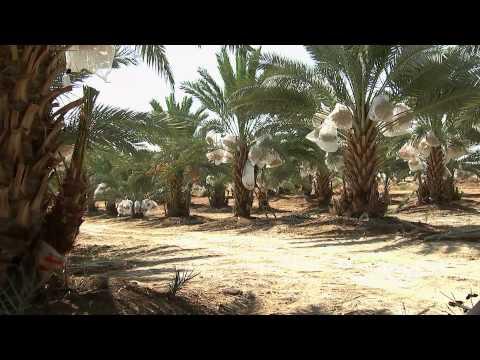 Nakheel Palestine - Who We Are (English Version)