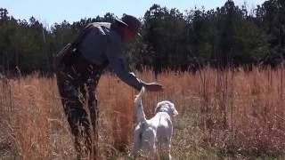 Lucy - Steady To Wing, Shot, Fall Of The Quail And Retrieve To Hand On Command