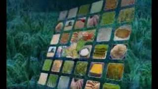 RICE PRODUCTION TECHNOLOGY PAKISTAN part-1DR.M.ASHRAF SAHIBZADA