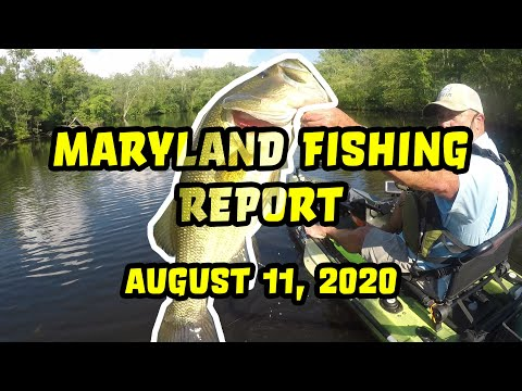 Maryland Fishing Report: August 11, 2020