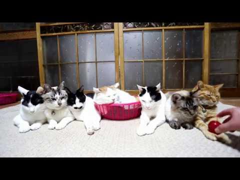 ミニりんごを乗せた7匹の猫 Mini apple and cats 2019 181202
