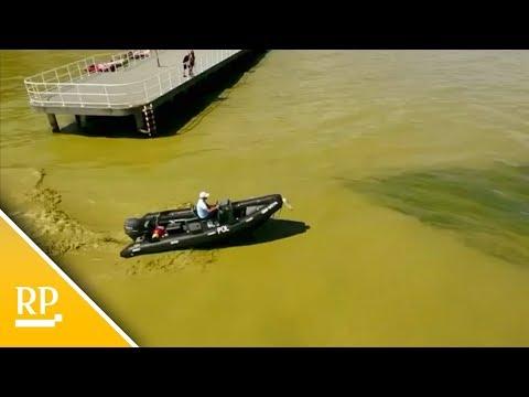 Giftige Blaualgen vertreiben Urlauber von den Stränden