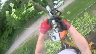 Baumfällung mittels Seilklettertechnik in Marburg