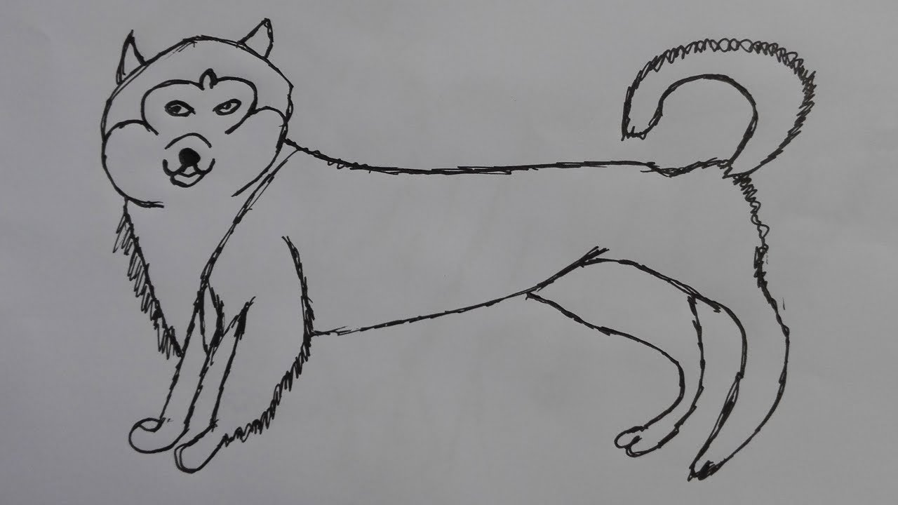 how to draw malamutskaya dog draw a realistic dog step by step easy draw a dog youtube