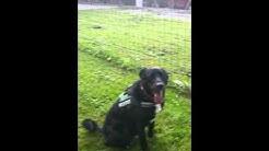 Balou aus dem Tierheim Lindau sucht endlich ein Zuhause!