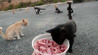 Hungrige Straßen Katzen füttern! - Meine Abendroutine