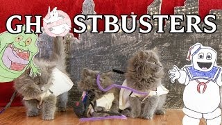 Ghostbusters (Cute Kitten Version) a tribute to Harold Ramis