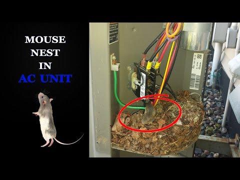 AC Not Turning On - Mouse Nest