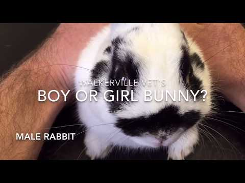 How to tell male and female rabbits apart