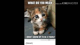 FUNNY CAT MEMES PICTURES
