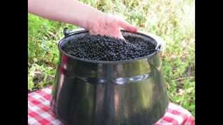 DIY - Holundersaft selber machen - Naturrezepte #1