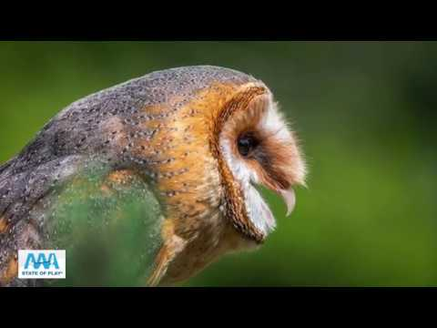 Common North American Bird Sounds And The Birds That Makes Them | AAA State Of Play