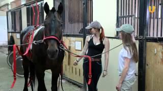 Завтрак 8. Тренер и наездница лошадей Дарья Овсянникова.