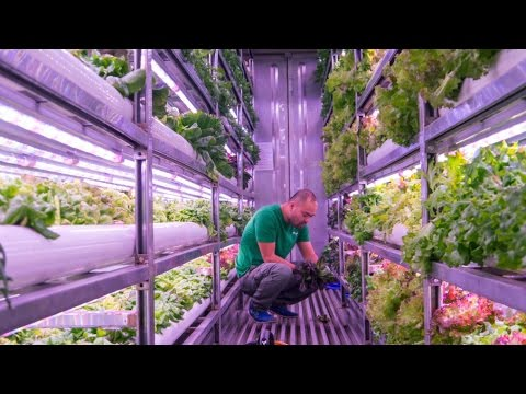 Vietnam When Containers Are Turned Into Hydroponic Vertical Farms