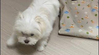 선풍기를 처음본 아기 강아지