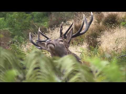 Hunting Deer 2021 NZ